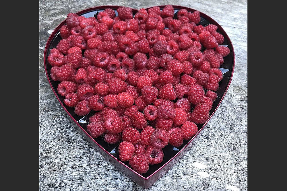 A basket of fresh-picked berries in a repurposed chocolate box recently given away on Buy Nothing Facebook group. (Courtesy of Liesl Clark)