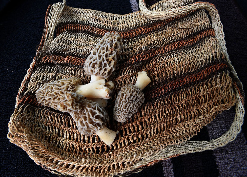 Nichols collects her morels in a mesh bag that releases spores through the fabric as she hunts to grow more mushrooms. (NWA Democrat-Gazette/Flip Putthoff)