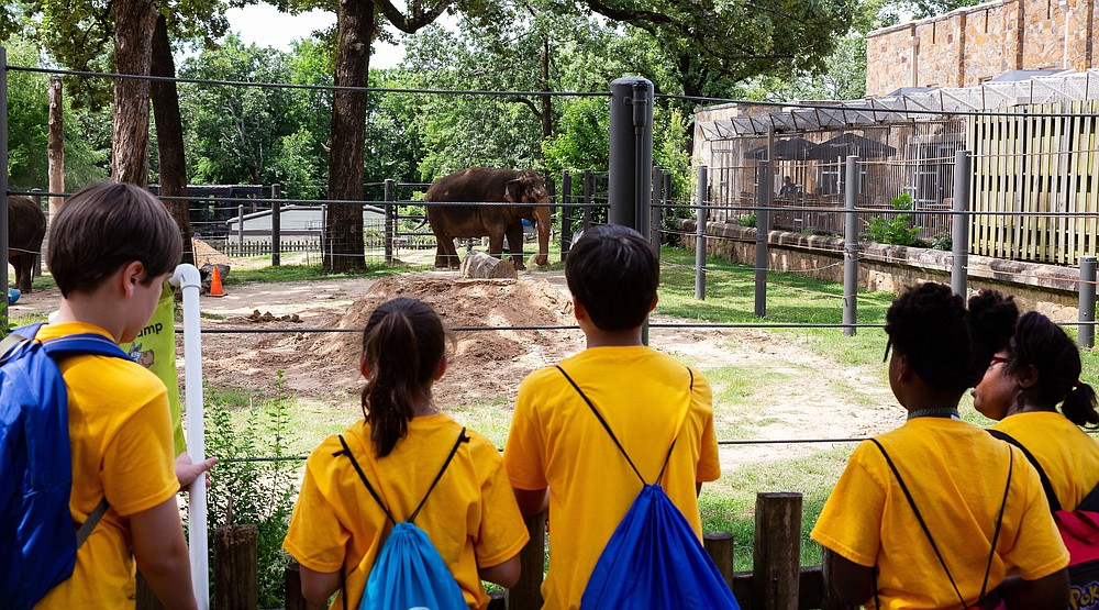 Campers view an elephant during the Little Rock Zoo's Zoofari Camp in 2019. (Courtesy of the Little Rock Zoo)