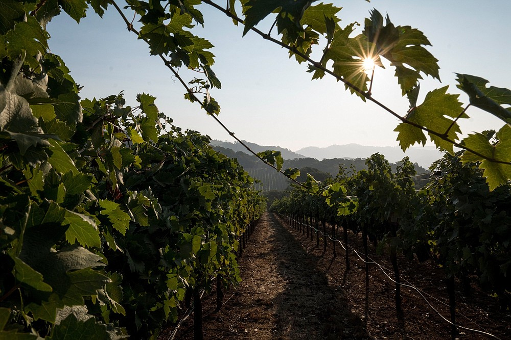 The sun rises over hill at a vineyard in Kenwood, Calif., on Sept. 21, 2020. SMUST CREDIT: Bloomberg photo by David Paul Morris.