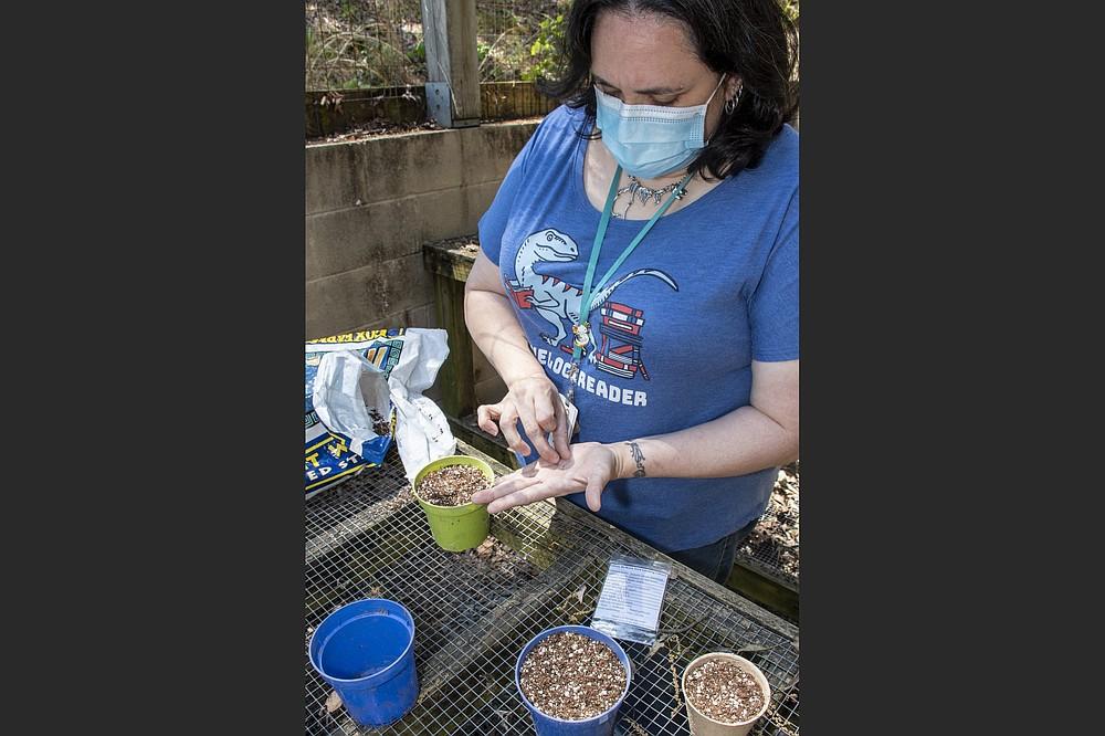 Vanessa Scroggins demonstrates how to plant seeds. (Arkansas Democrat-Gazette/Cary Jenkins)