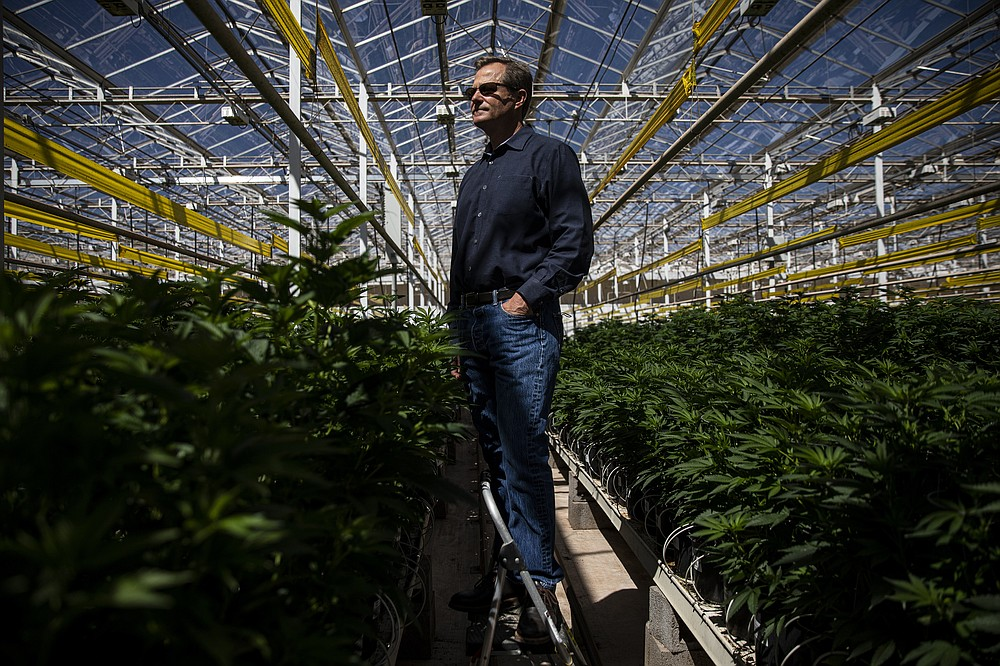Fife Symington IV, a partial owner of Copperstate Farms, a cannabis company in Snowflake, Ariz., in the company's greenhouse on March 23, 2021. Copperstate Farms bills itself as the largest wholesaler of cannabis in the state — it may be the biggest greenhouse dedicated exclusively to cannabis in North America. (Adriana Zehbrauskas/The New York Times)