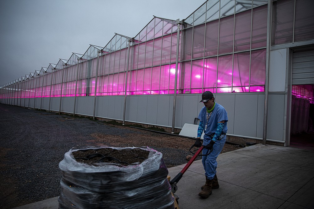 """A worker outside the Copperstate Farms greenhouse in Snowflake, Ariz., March 23, 2021. Locals refer to the 40-acre greenhouse as """"the marijuana farm."""" (Adriana Zehbrauskas/The New York Times)"""