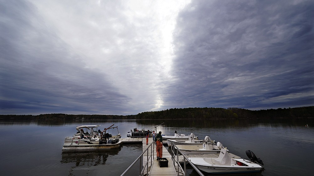 """An oysterman drags a tray of adult """"Uglie"""" oysters from Maine to awaiting oyster boats at Great Bay, Monday, May 3, 2021, in Durham, N.H. Thousands of Uglies from Maine, which were left to grow due to lack of retail demand of more than a year because of the virus outbreak, were relocated to Great Bay to enhance the shellfish species in New Hampshire coastal waters. (AP Photo/Charles Krupa)"""
