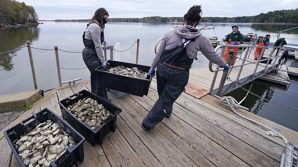 """Alix Laferriere, right, and Brianna Group, both of the The Nature Conservancy, carry trays of adult """"Uglie"""" oysters from Maine to awaiting oyster boats at Great Bay, Monday, May 3, 2021, in Durham, N.H. Thousands of Uglies from Maine, which were left to grow due to lack of retail demand of more than a year because of the virus outbreak, were relocated to Great Bay to enhance the shellfish species in New Hampshire coastal waters. (AP Photo/Charles Krupa)"""