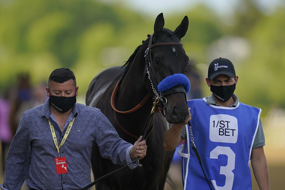 Medina Spirit is walked on the track before participating in the 146th Preakness Stakes horse race at Pimlico Race Course, Saturday, May 15, 2021, in Baltimore. (AP Photo/Julio Cortez)