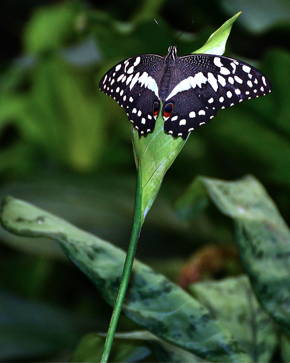 When the pandemic shut down butterfly exhibits, the Butterfly Palace stepped in to save as many butterflies as it could that were stuck in transit.  (Courtesy Photo/Butterfly Palace)