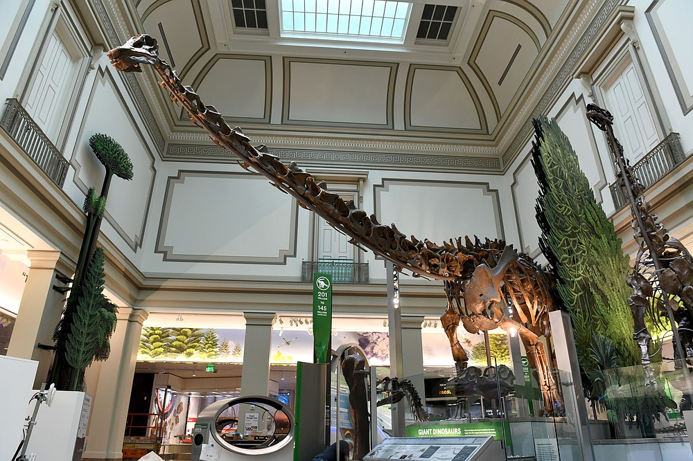A diplodocus that lived 152 million years looms tall in the Natural History Museum's fossil hall. (The Washington Post/Katherine Frey)