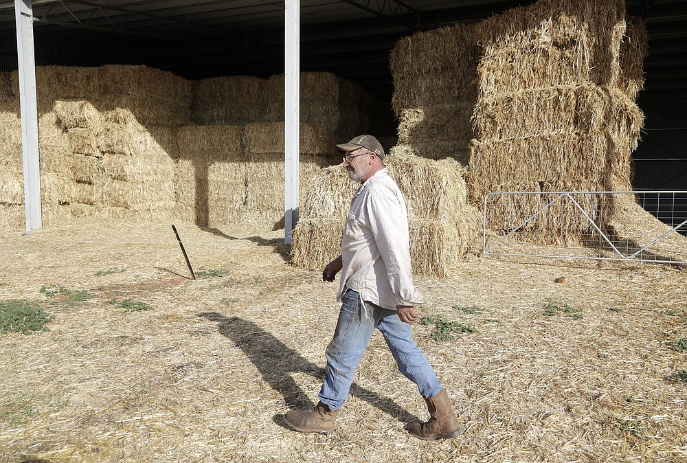 """Bruce Barnes walks past stored hay infested with mice on his family's farm near Bogan Gate, Australia on May 20, 2021. Vast tracts of land in Australia's New South Wales state are being threatened by a mouse plague that the state government describes as """"absolutely unprecedented."""" Just how many millions of rodents have infested the agricultural plains across the state is guesswork. (AP Photo/Rick Rycroft)"""