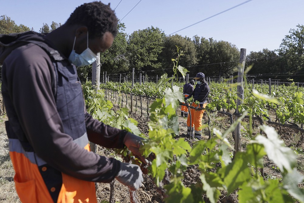 Yahya Adams, of Ghana, left, works on a grapevine with workmates with workmates Samadou Yabati, of Togo, background center and Abo Kouadjo Fulgence, of Ivory Coast, at the Nardi vineyard in Casal del Bosco, Italy, Thursday, May 27, 2021. It is a long way, and a risky one. But for this group of migrants at least it was worth the effort. They come from Ghana, Togo, Sierra Leone, Pakistan, Guinea Bissau, among other countries. They all crossed the Sahara desert, then from Libya the perilous Mediterranean Sea until they reached Italian shores, now they find hope working in the vineyards of Tuscany to make the renown Brunello wine. (AP Photo/Gregorio Borgia)