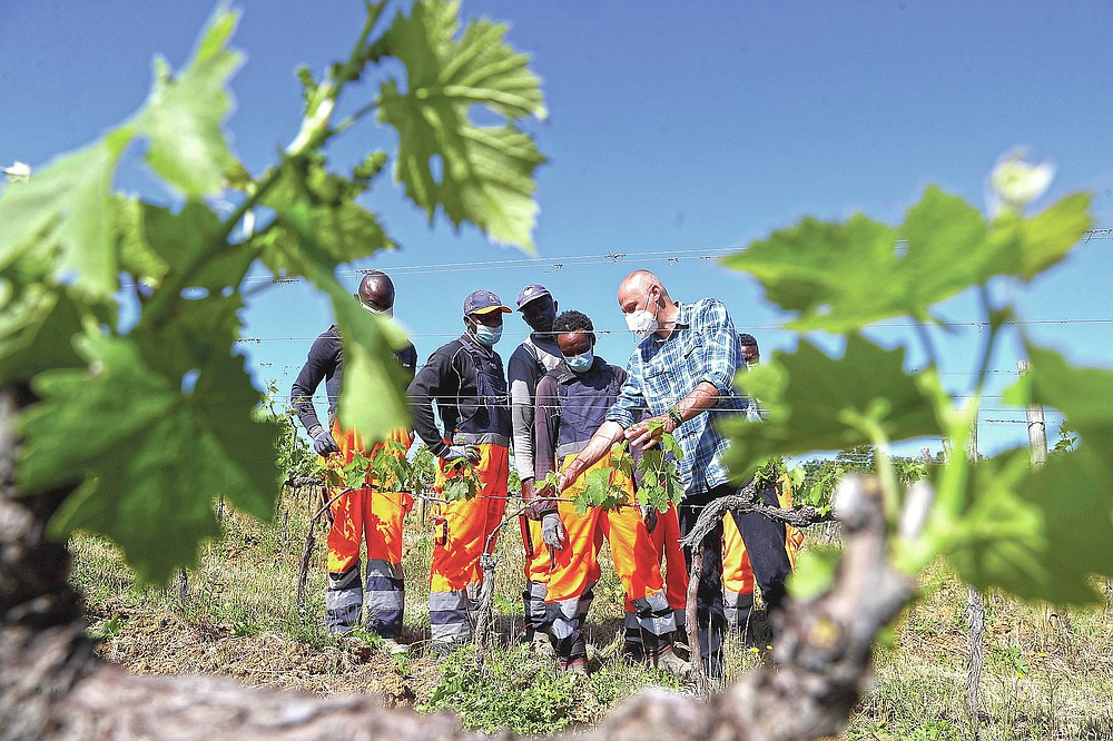 Agronomist Vittorio Stringari, right, explains to Yahya Adams, of Ghana, second from right, Ibrahima Fofana, of Mali, third from right, Samadou Yabati, of Togo, fourth from right, and Tholley Osman, of Sierra Leone, how to cut leaves from a grapevine at the Nardi vineyard in Casal del Bosco, Italy, Thursday, May 27, 2021. It is a long way, and a risky one. But for this group of migrants at least it was worth the effort. They come from Ghana, Togo, Sierra Leone, Pakistan, Guinea Bissau, among other countries. They all crossed the Sahara desert, then from Libya the perilous Mediterranean Sea until they reached Italian shores, now they find hope working in the vineyards of Tuscany to make the renown Brunello wine. (AP Photo/Gregorio Borgia)
