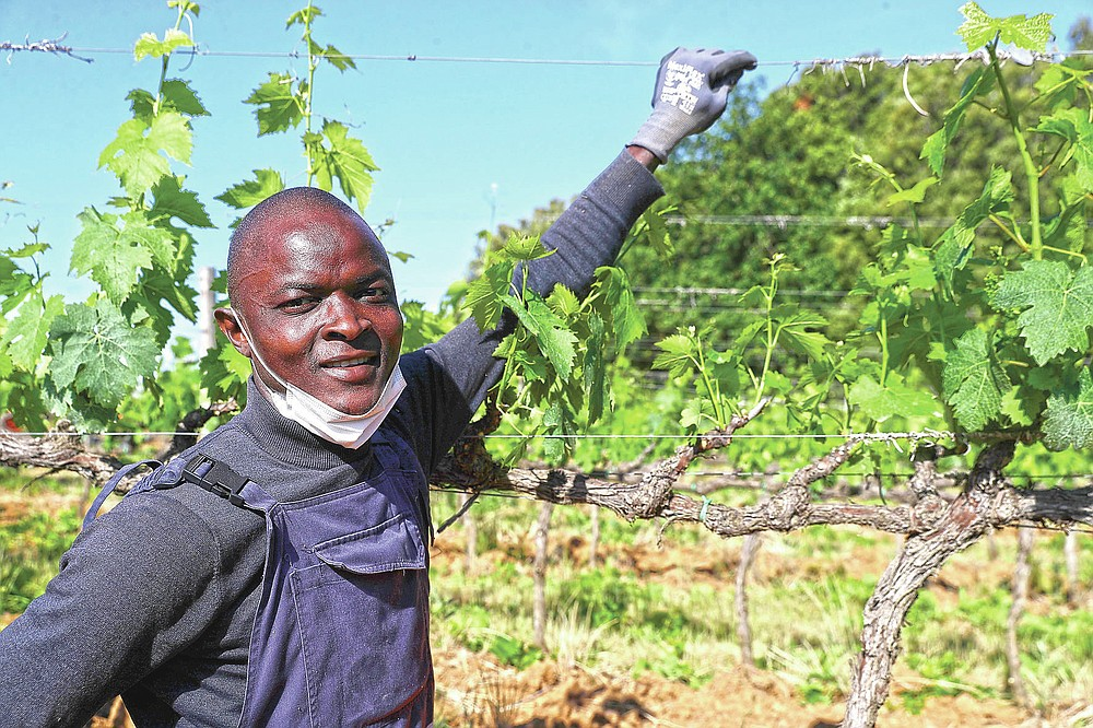 Tholley Osman, 21 years old, of Sierra Leone, poses for a picture at the Nardi vineyard in Casal del Bosco, Italy, Friday, May 28, 2021.It is a long way, and a risky one. But for this group of migrants at least it was worth the effort. They come from Ghana, Togo, Sierra Leone, Pakistan, Guinea Bissau, among other countries. They all crossed the Sahara desert, then from Libya the perilous Mediterranean Sea until they reached Italian shores, now they find hope working in the vineyards of Tuscany to make the renown Brunello wine. (AP Photo/Gregorio Borgia)