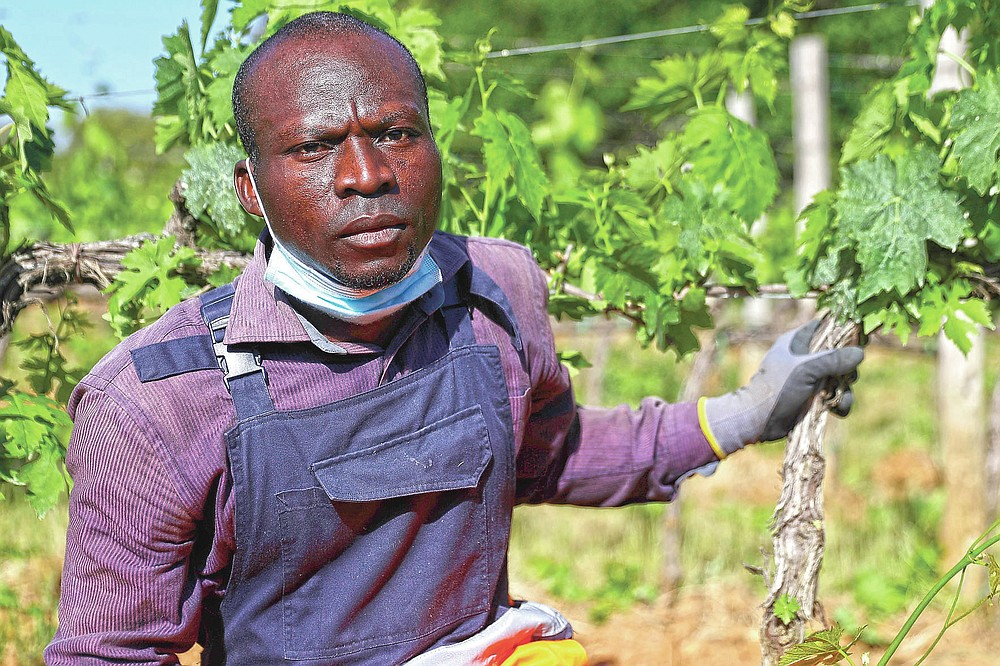 Ali Akim, 34 years-old, of Togo, poses for a picture at the Nardi vineyard in Casal del Bosco, Italy, Friday, May 28, 2021. It is a long way, and a risky one. But for this group of migrants at least it was worth the effort. They come from Ghana, Togo, Sierra Leone, Pakistan, Guinea Bissau, among other countries. They all crossed the Sahara desert, then from Libya the perilous Mediterranean Sea until they reached Italian shores, now they find hope working in the vineyards of Tuscany to make the renown Brunello wine. (AP Photo/Gregorio Borgia)