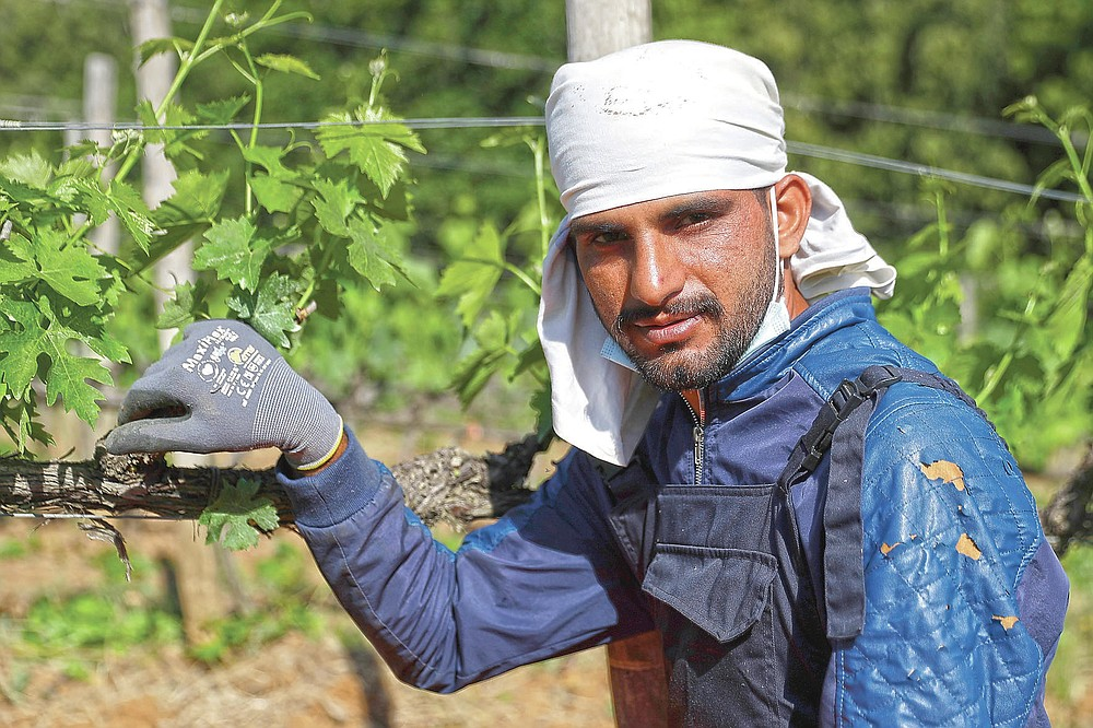 Jawad Jawad, 31 years-old, of Pakistan, poses for a picture at the Nardi vineyard in Casal del Bosco, Italy, Friday, May 28, 2021. It is a long way, and a risky one. But for this group of migrants at least it was worth the effort. They come from Ghana, Togo, Sierra Leone, Pakistan, Guinea Bissau, among other countries. They all crossed the Sahara desert, then from Libya the perilous Mediterranean Sea until they reached Italian shores, now they find hope working in the vineyards of Tuscany to make the renown Brunello wine. (AP Photo/Gregorio Borgia)