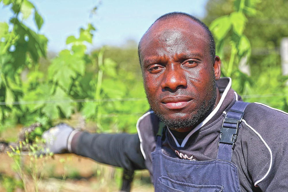 Samadou Yabati, 34 years-old, of Togo, poses for a picture at the Nardi vineyard in Casal del Bosco, Italy, Friday, May 28, 2021. It is a long way, and a risky one. But for this group of migrants at least it was worth the effort. They come from Ghana, Togo, Sierra Leone, Pakistan, Guinea Bissau, among other countries. They all crossed the Sahara desert, then from Libya the perilous Mediterranean Sea until they reached Italian shores, now they find hope working in the vineyards of Tuscany to make the renown Brunello wine. (AP Photo/Gregorio Borgia)