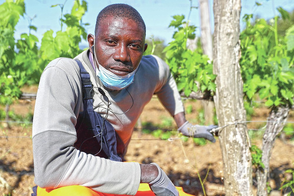 Ibrahima Fofana, 30 years-old, of Mali, poses for a picture at the Nardi vineyard in Casal del Bosco, Italy, Friday, May 28, 2021. It is a long way, and a risky one. But for this group of migrants at least it was worth the effort. They come from Ghana, Togo, Sierra Leone, Pakistan, Guinea Bissau, among other countries. They all crossed the Sahara desert, then from Libya the perilous Mediterranean Sea until they reached Italian shores, now they find hope working in the vineyards of Tuscany to make the renown Brunello wine. (AP Photo/Gregorio Borgia)