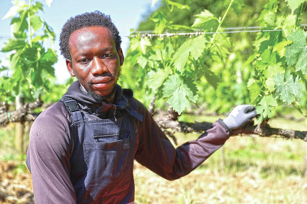 Yahya Adams, 21 years-old, of Ghana, poses for a picture at the Nardi vineyard in Casal del Bosco, Italy, Friday, May 28, 2021. It is a long way, and a risky one. But for this group of migrants at least it was worth the effort. They come from Ghana, Togo, Sierra Leone, Pakistan, Guinea Bissau, among other countries. They all crossed the Sahara desert, then from Libya the perilous Mediterranean Sea until they reached Italian shores, now they find hope working in the vineyards of Tuscany to make the renown Brunello wine. (AP Photo/Gregorio Borgia)