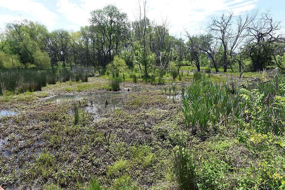 Dozens of flower, plant and tree varieties make up the diverse ecosystem of the Osage Park wetland.  (NWA Democrat-Gazette/Flip Putthoff)