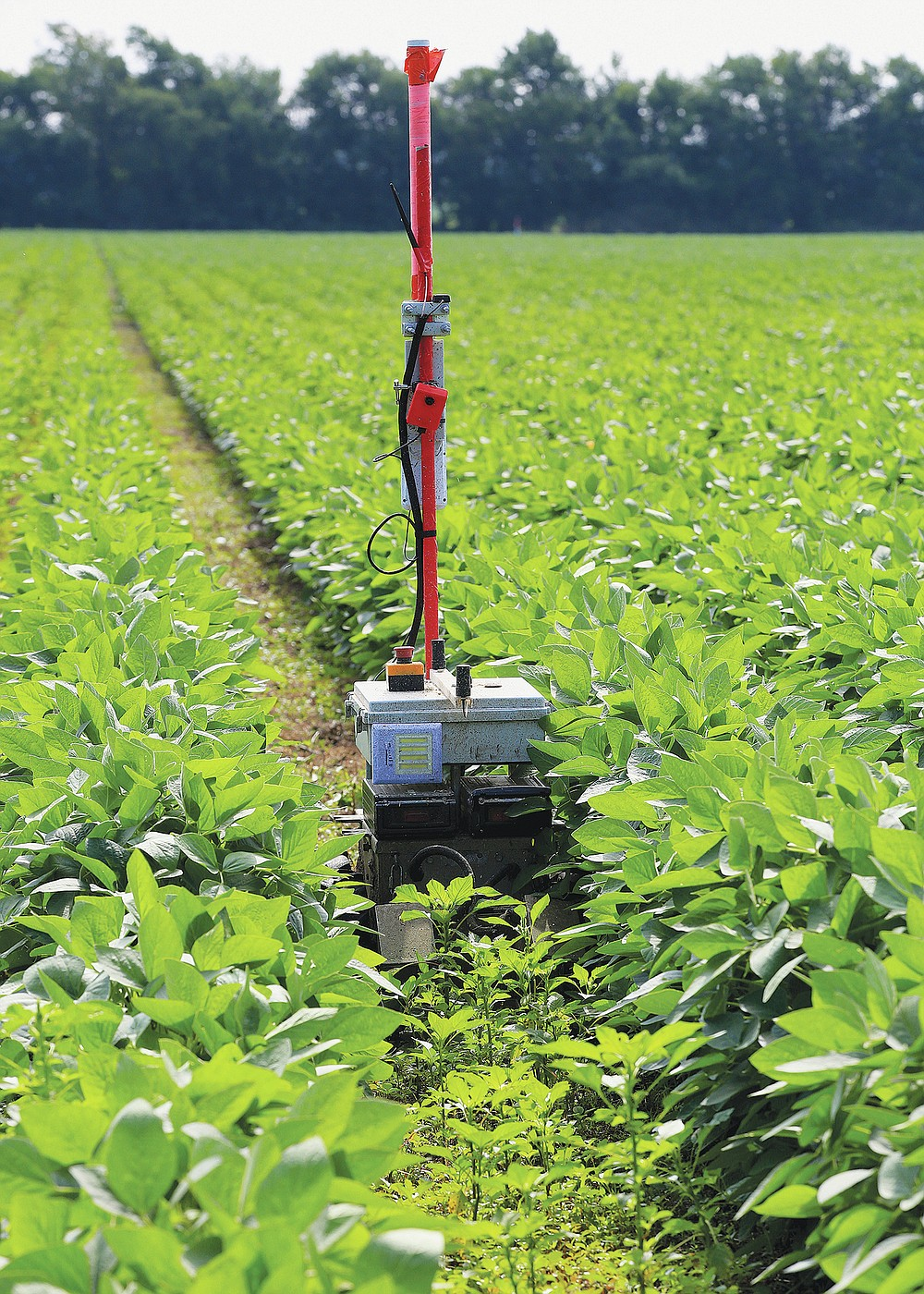 A Greenfield Robotics robot travels in between rows of soybeans as it cuts down weeds in a field near Cheney, Kan., on Tuesday, July 6, 2021. In front of the robot is the density of weeds that will be cut and behind it shows the result. (Sandra J. Milburn/The Hutchinson News via AP)