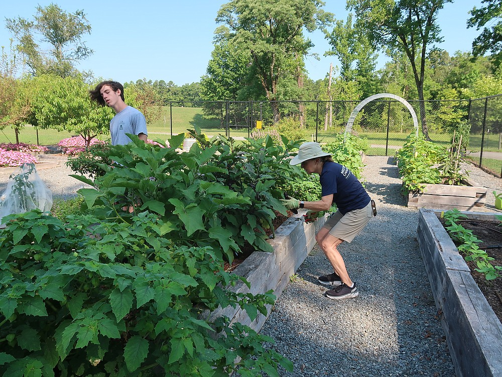 Jackson Canon (left) and Ginger Fleming work on their crops at the Garden at the Vines. (Special to the Democrat-Gazette/Janet Carson)