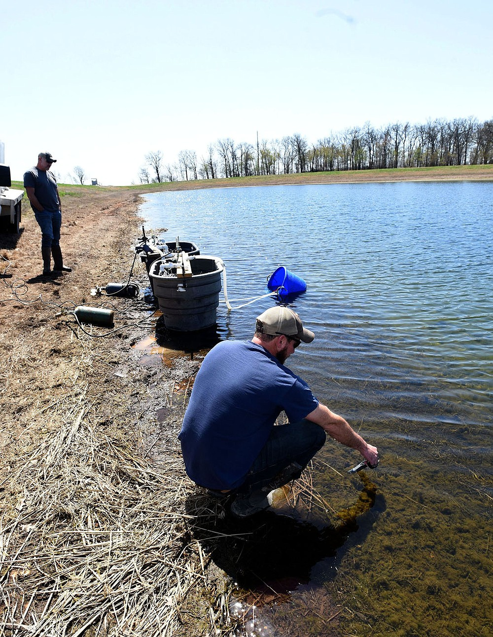 Hatchery workers, including manager Joe Adams (right), transfer walleye fry into a pond at the hatchery. The walleye will grow into fingerlings about two inches long. Then they'll be transported and stocked at Beaver and other lakes. (NWA Democrat-Gazette/Flip Putthoff)