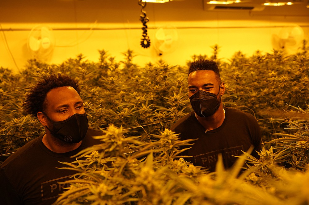 Calvin Johnson, right, and business partner Rob Sims look over marijuana plants growing under special lights at their business in Webberville, Mich., Friday, June 4, 2021. The former Detroit Lions wide receiver has founded a cannabis business and is collaborating with Harvard University to research how marijuana can help people with CTE and chronic pain. (AP Photo/Carlos Osorio)