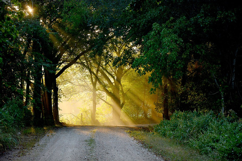Submitted/TERRY STANFILL And, close to his home, Terry captured the early morning sun's rays on the road in Coon Hollow, west of Gentry and Decatur.