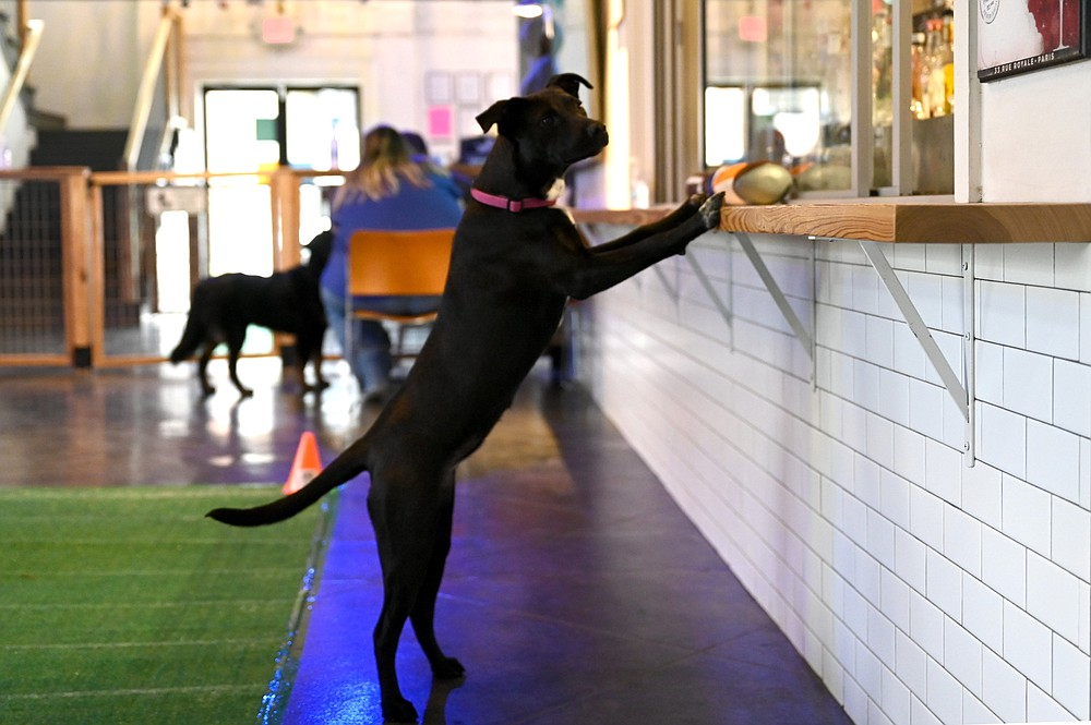 Bark Bar on Spring Street in Little Rock's Quapaw Quarter marks its fourth anniverary and National Dog Day Aug. 26 and 28. (Democrat-Gazette file photo/Stephen Swofford)
