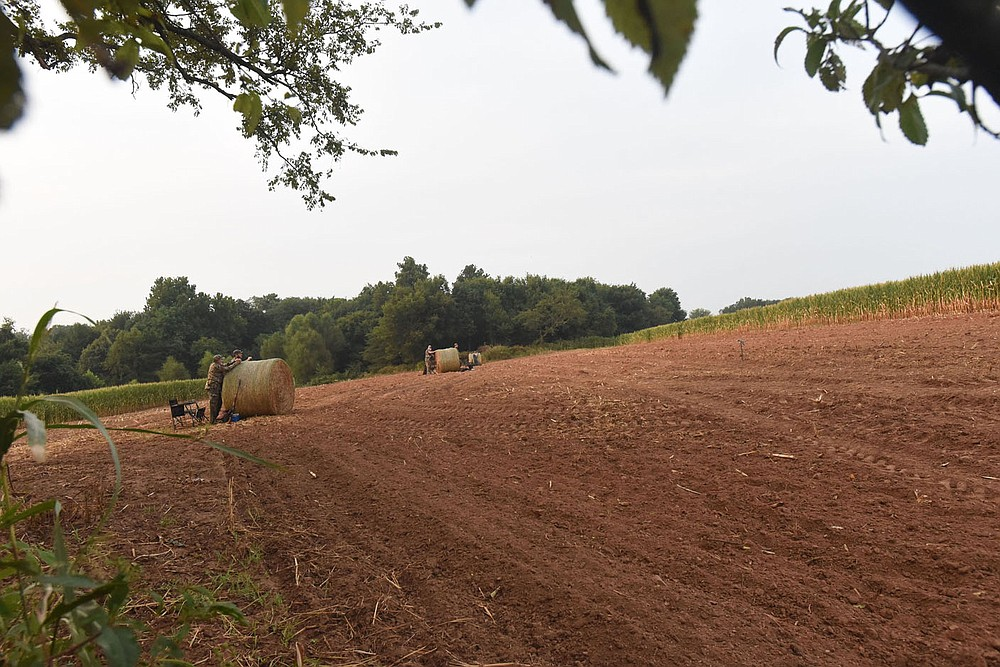 Arkansas Game and Fish Commission prepares fields around the state to attract mourning doves. This permit-only field, seen Sept. 4 2021 near Prairie Grove, has harvested corn and freshly planted wheat as food for doves. Game and Fish manages several nonpermit fields that are open to everyone throughout the dove season. (NWA Democrat-Gazette/Flip Putthoff)