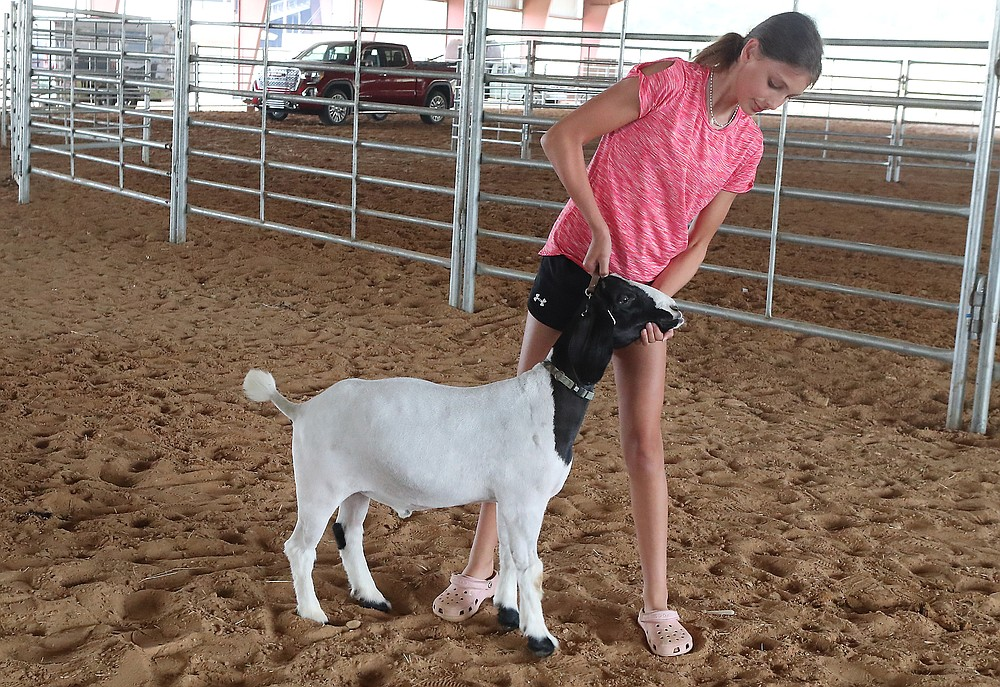 Ava Graves works with her show goat, Oreo, on Monday at the Garland County Fairgrounds in preparation for competition at the Garland County Fair. - Photo by Richard Rasmussen of The Sentinel-Record