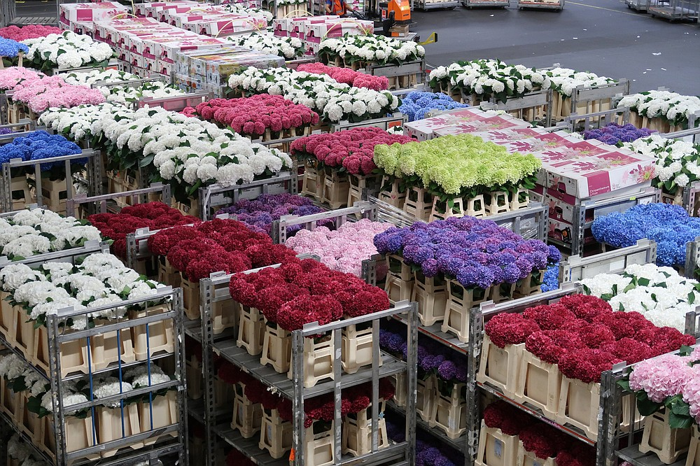 Crates of tulips await buyers at the 2018 Royal Flora Holland Flower and Bulb Auction in Amsterdam.  (Special to the Democrat-Gazette / Janet B. Carson)