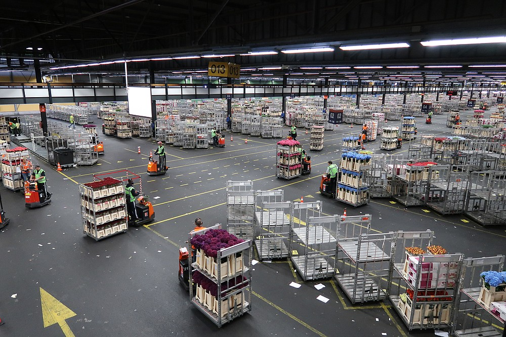 Behind the scenes at a large 2018 tulip auction in Amsterdam, forklifts move crates of flowers as they are purchased.  (Special to the Democrat-Gazette / Janet B. Carson)