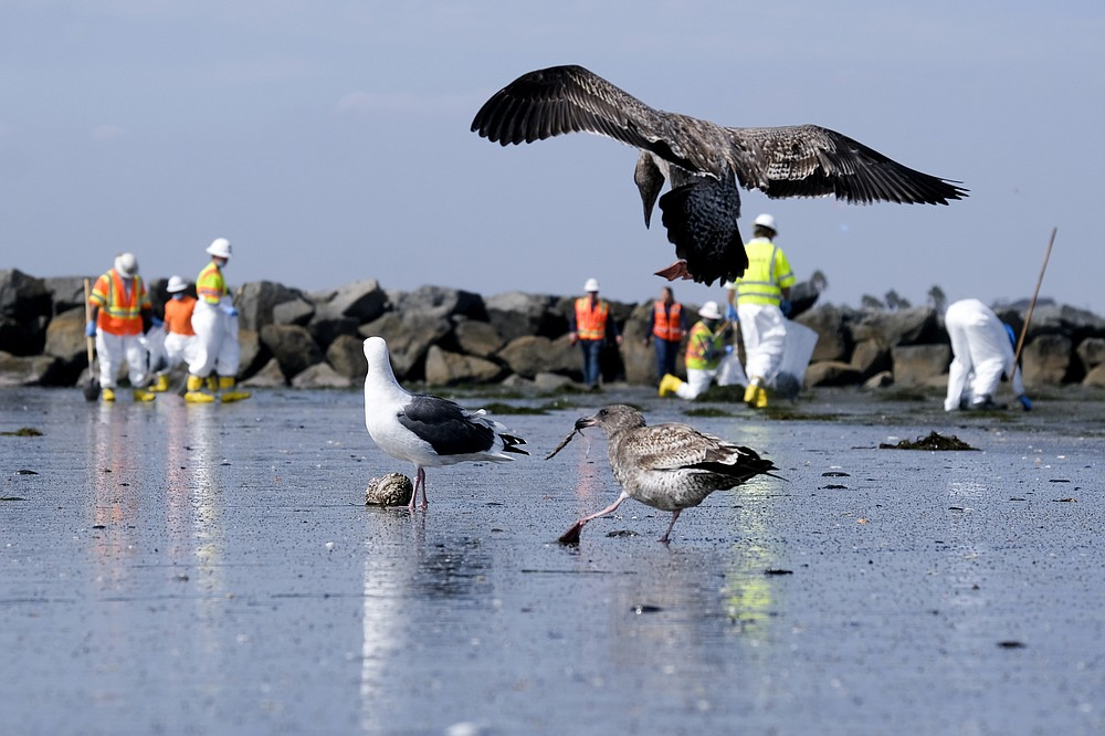 Birds are seen as workers in protective suits clean the contaminated beach after an oil spill in Newport Beach, Calif., on Wednesday, Oct. 6, 2021. A major oil spill off the coast of Southern California fouled popular beaches and killed wildlife while crews scrambled Sunday, to contain the crude before it spread further into protected wetlands. (AP Photo/Ringo H.W. Chiu)