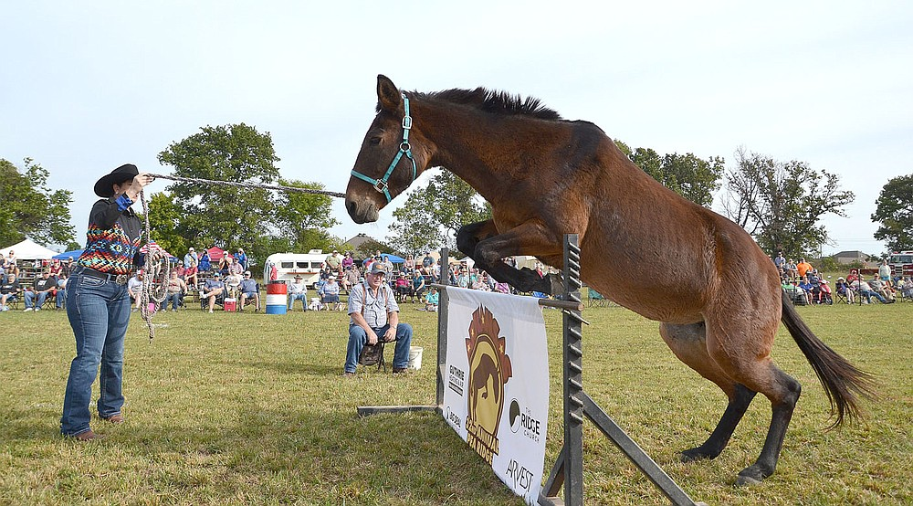 Heather Lutke of Big Cabin, Mo., shows off Halo's skills in the jump. She said Halo is more than 25 years old.