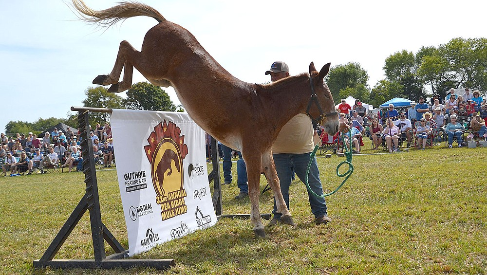 Jerry Nelson and Dexter took second place in the 51 inches and over mule jump. For more photographs, go to https://tnebc.nwaonline.com/photos/.